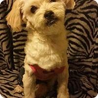 Adopt A Pet :: SUNNY - Higley, AZ