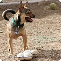 Adopt A Pet :: Otis - Surprise, AZ