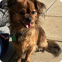 Adopt A Pet :: Niko - Catharpin, VA