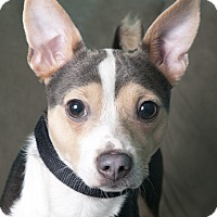 Adopt A Pet :: James - Chicago, IL