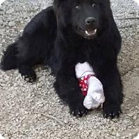 Adopt A Pet :: Cooper - Liberty, MO