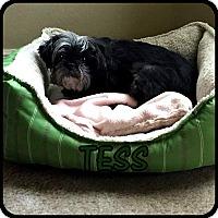 Adopt A Pet :: TESS in Rogers, AR - Seymour, MO