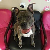 Adopt A Pet :: Oink - Fargo, ND