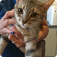 Adopt A Pet :: MAVIS - Glendale, AZ