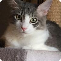 Adopt A Pet :: Dexter - Sarasota, FL