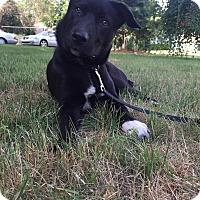 Adopt A Pet :: Luna - Bristol, CT