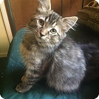 Adopt A Pet :: Ella - Incline Village, NV