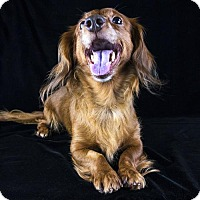 Adopt A Pet :: Minnie Hill - Houston, TX