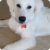 Adopt A Pet :: Howdy *Adopted - Tulsa, OK