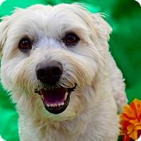 Adopt A Pet :: Buckley - Irvine, CA