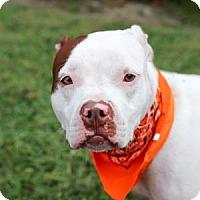 Adopt A Pet :: Pyro - Lakeland, FL