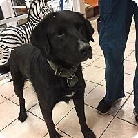 Adopt A Pet :: Sam - Towson, MD