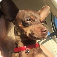 Adopt A Pet :: Dory - San Marcos, CA