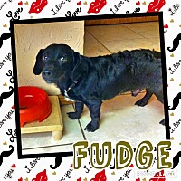 Adopt A Pet :: Fudge - Enid, OK