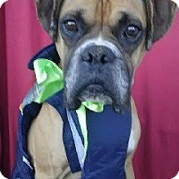 Adopt A Pet :: HENRY - San Diego, CA