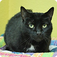 Adopt A Pet :: Sugar - Benbrook, TX
