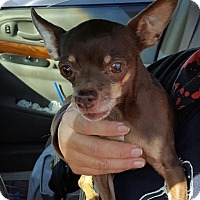 Adopt A Pet :: Cherry - Tombstone, AZ