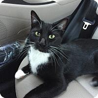 Adopt A Pet :: Louie 2 - Richmond, VA