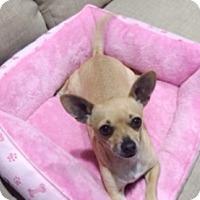 Adopt A Pet :: Honey - Castro Valley, CA