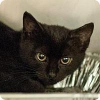Adopt A Pet :: Kai - Decatur, GA