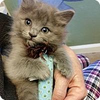 Adopt A Pet :: Boo - Tampa, FL