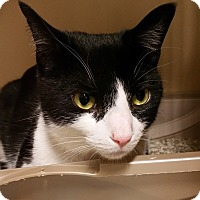 Adopt A Pet :: Linore - Franklin, NH