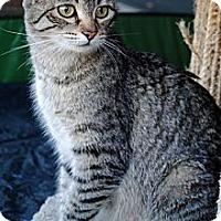 Adopt A Pet :: Emily - Palmdale, CA