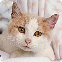 Adopt A Pet :: NIssan - St Louis, MO