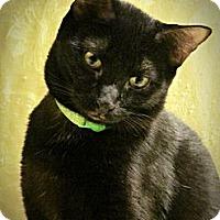 Adopt A Pet :: Davis - Seminole, FL
