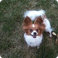 Adopt A Pet :: Hope - Hilliard, OH