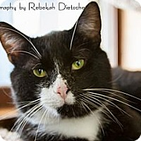 Adopt A Pet :: Bubba - Byron Center, MI