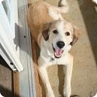 Adopt A Pet :: Zeus - Foster, RI