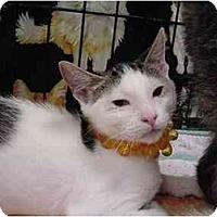 Adopt A Pet :: Jezebel - The Colony, TX