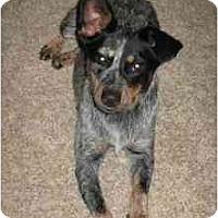 Adopt A Pet :: Monroe - Phoenix, AZ