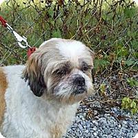 Adopt A Pet :: Coconut - Brattleboro, VT