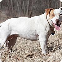 Adopt A Pet :: Tara - Broken Arrow, OK