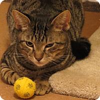 Adopt A Pet :: Howard - Raritan, NJ