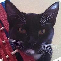 Adopt A Pet :: Chloe - Winchester, CA