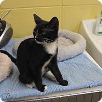 Adopt A Pet :: Satsuma - Lake Charles, LA