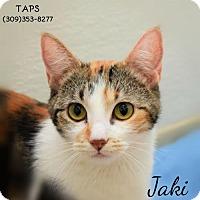 Adopt A Pet :: Jaki - Pekin, IL