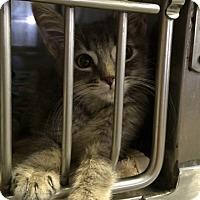 Adopt A Pet :: Dane - Byron Center, MI