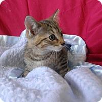 Adopt A Pet :: Yukon - Winchendon, MA
