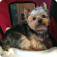 Adopt A Pet :: Sonny - Los Angeles, CA