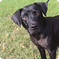 Adopt A Pet :: Karen - Waldorf, MD