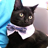 Adopt A Pet :: Herman Munster - Toledo, OH