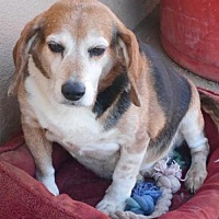 Adopt A Pet :: Chubbs-Miracle Boy! - Apple Valley, CA