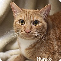 Adopt A Pet :: Mango - Foothill Ranch, CA