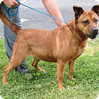 Hound (Unknown Type)/Terrier (Unknown Type, Medium) Mix Dog for adoption in Reeds Spring, Missouri - Connie