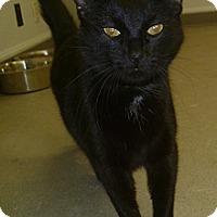 Adopt A Pet :: Black Jack - Hamburg, NY