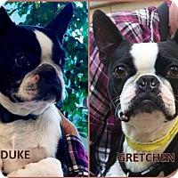 Adopt A Pet :: Gretchen and Duke - Huntington Beach, CA